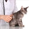 Ветеринарные клиники в Возрождении